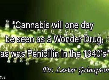 cannabis wonder drug penicillin dr lester grinspoon