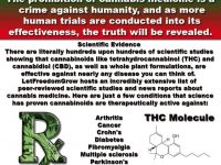 marijuana prohibition crime against humanity