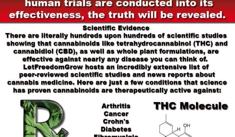 Cannabis Prohibition Is A Crime Against Humanity
