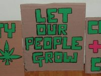 marijuana protest placards