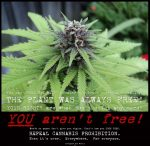 Repeal cannabis prohibition