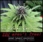 Repeal cannabis prohibition