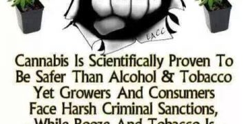 scientifically proven that cananbis is safer than alcohol and tobacco