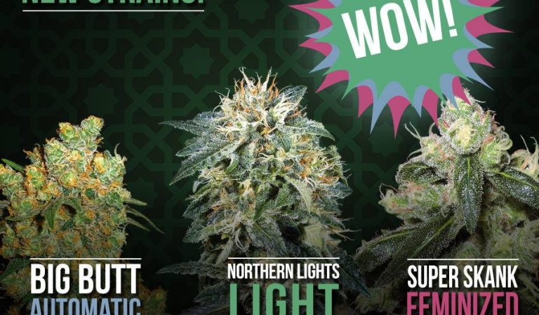 New Strains from Sensi Seeds
