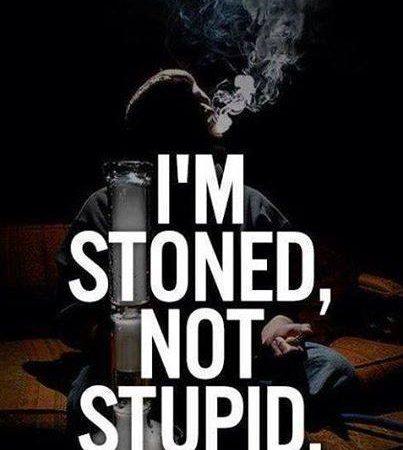 I'm stoned not stupid