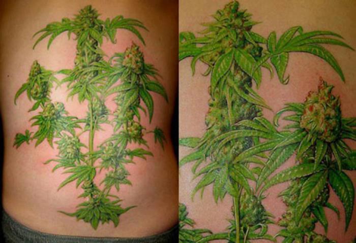 best marijuana plant tattoo ever