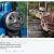 thomas-tank-engine-marijuana