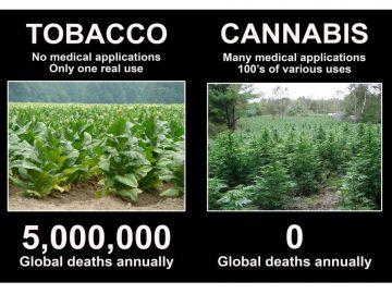 Tobacco v Cannabis deaths meme