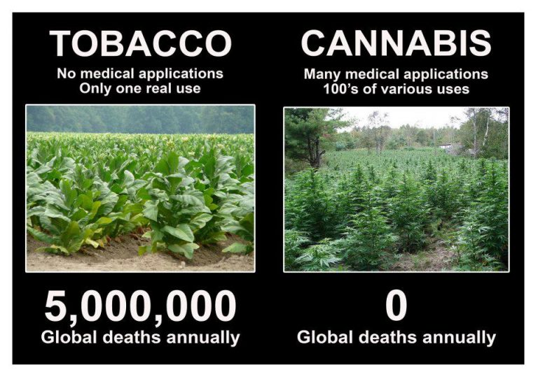 Tobacco v Cannabis deaths meme