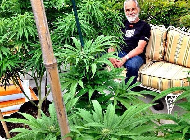 Tommy Chong in his garden of pot plants