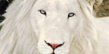 truth like lion defend