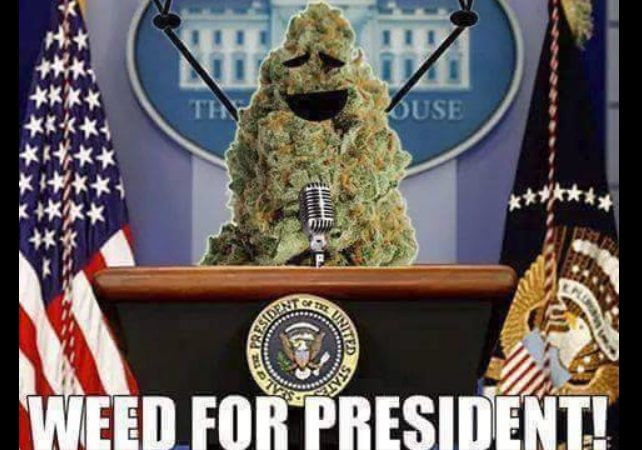 Poll: Weed more popular than all 2016 candidates
