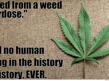 died from marijuana overdose never ever