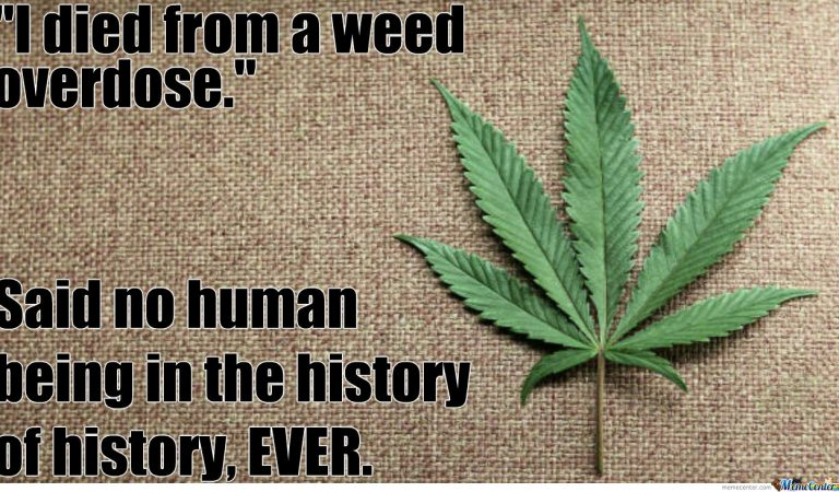 """"""" I died from a weed overdose"""" said no-one ever!"""