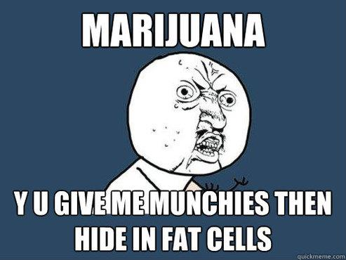 marijuana fat cells munchies meme