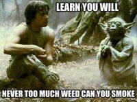 learn you will smoke weed yoda meme