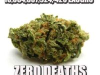 marijuana killed zero people
