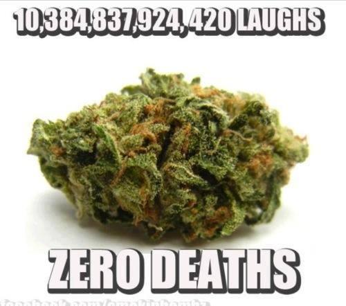 marijuana killed zero people